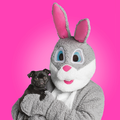 PetSmart has launched its Easter Collection chock-full of festive apparel, accessories, toys and treats for the season. Pet parents are invited to celebrate the spring holiday with a photo op of their pet and the Easter Bunny, who will be visiting all PetSmart stores across North America, Saturday, April 8, 12-4 p.m. (local time; please check your local store for availability). (Photo: Business Wire)