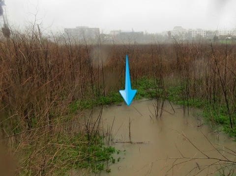 1-22-17 South Wetland Drain - Rains Submerge Illegal Playa Vista Drain. Approximately 1 foot tall, from soil to grill-peak. Multiple rain events submerged the drains. (Photo: Business Wire)