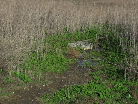 1-23-17 South Wetland Drain - Rainwater Has Been Drained Out of Wetlands into Ballona Flood Control Channel to Pacific Ocean, throwing away roughly 100,000-200,000 cubic feet of water from this drainage area alone. (Photo: Business Wire)