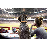 A pet parent and her pup take in America's favorite pastime on the PetSmart Patio at Chase Field, where for every Sunday and Monday home games this season, dogs are welcome on the PetSmart Patio, which features 30 Doggie Suites and all-you-can-eat baseball fare for people and doggie ice cream complete with kibble topping for the pups. Permanent PetSmart-sponsored facilities at Chase Field include the Patio, indoor and outdoor dog parks and The Adopt Spot™ pop-up adoption center, where 60 pups were adopted by dog-loving D-backs fans last season -- making Chase the most dog-friendly stadium in the U.S. (Photo: Business Wire)