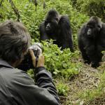 Gorilla Trekking (Photo: Business Wire)