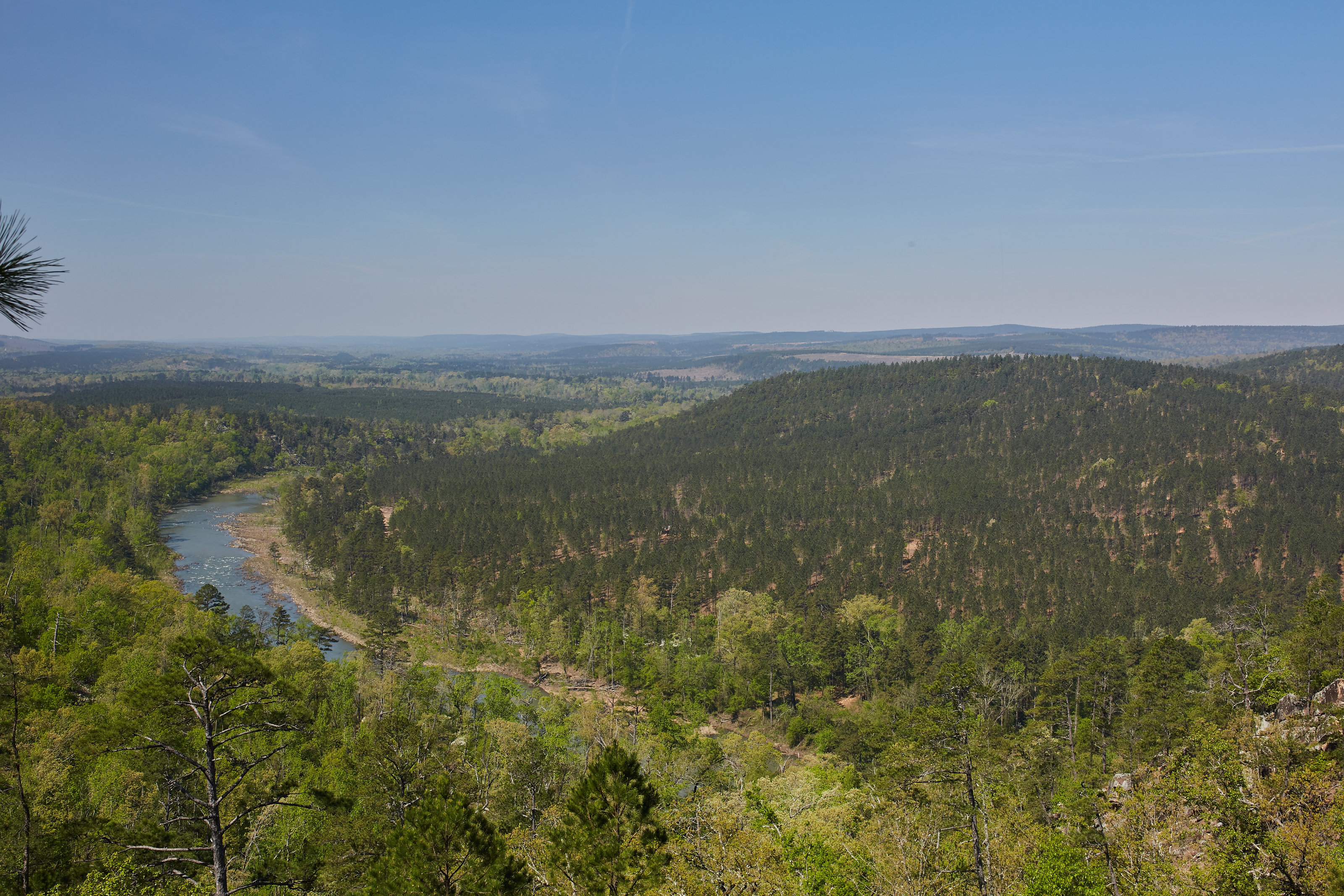 View of the Project Pushmataha timberland offering (Photo: Business Wire)