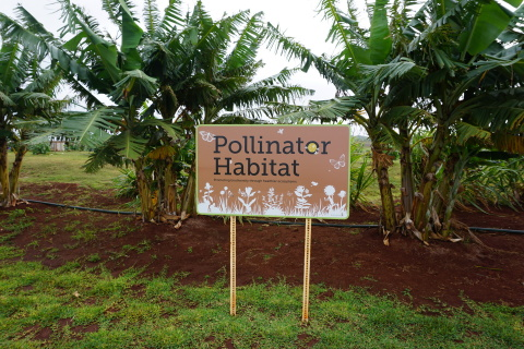 Monsanto Hawaii is just one of Monsanto's sites awarded certification by the Wildlife Habitat Council (WHC) for conservation efforts. The WHC is a national organization that promotes and certifies habitat conservation and management on corporate lands. (Photo: Business Wire)
