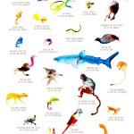 Artwork: Lost Species artwork by Alexis Rockman