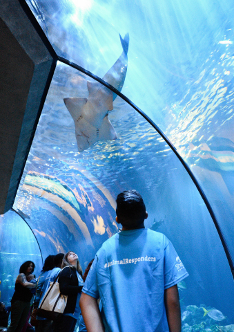 Students from Memorial Junior High School enjoy Shedd Aquarium's Wild Reef exhibit as winners of Dawn and Shedd's NextGen Animal Responders program on Thursday, May 25, 2017 in Chicago. (Photo by Brian Kersey/Invision for Dawn/AP Images)