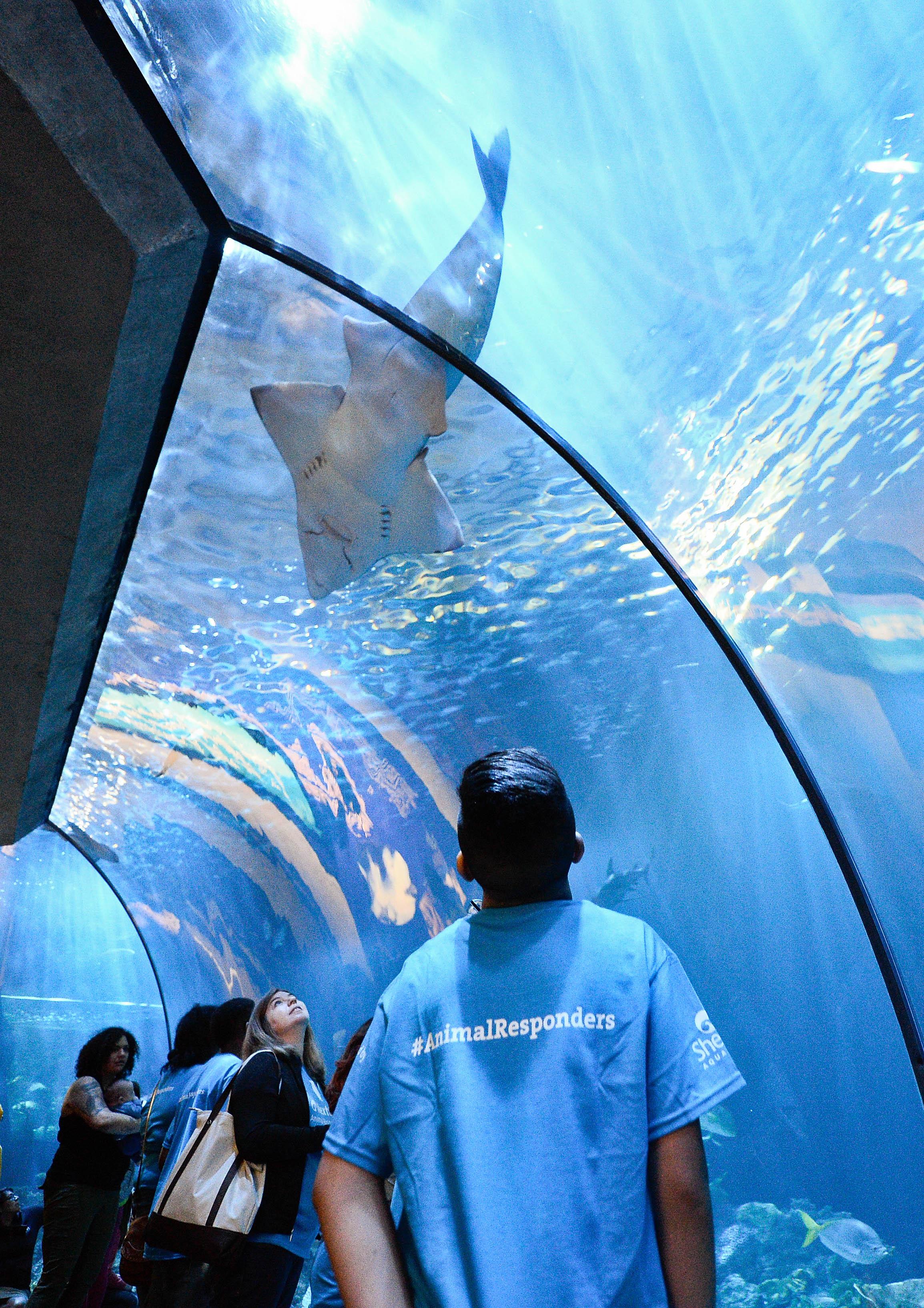 Dish Soap And Shedd Aquarium Crown The