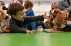 Jacob Hunt, 2, of Arlington, Mass., meets Sophie, a Cavalier King Charles Spaniel and therapy dog in the Pawprints program at Boston Children's Hospital on May 25. PetSmart Charities, the leading funder of animal welfare, announced a $360,000 grant to help the 14-year-old animal-assisted visitation program expand from 17 therapy dogs to 34 and serve more patients, families and staff at three affiliate Boston Children's Hospital locations. (Josh Reynolds/AP Images for PetSmart Charities)