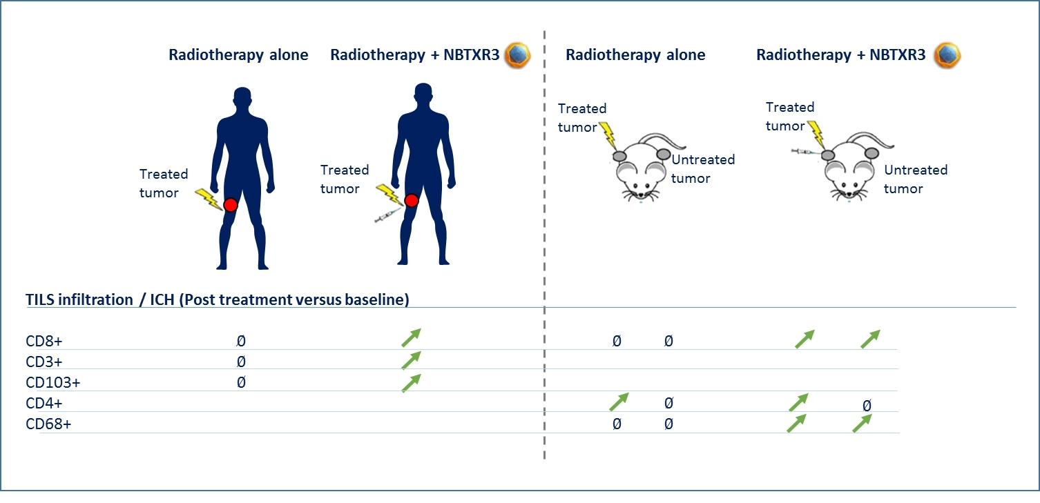 Tumor Immune Cell Infiltrates (TILs) (Photo: Business Wire)