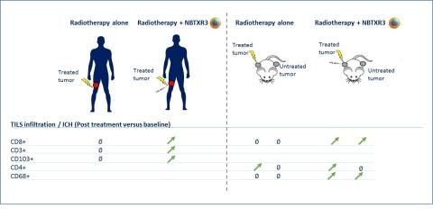 Lymphocytes infiltrants les tumeurs (TILs)(Photo: Business Wire)