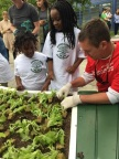 Wells Fargo Team Member Dan Sweeney joined The Kitchen Community to help Chicago Public School students plant a new Learning Garden at Wendell Smith Elementary School. The bank donated $2 million to the nonprofit to build hundreds more gardens across the country. (Photo: Business Wire)