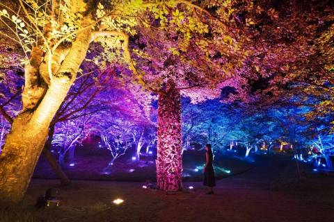 Resonating Forest and Sculpture (Photo: Business Wire)