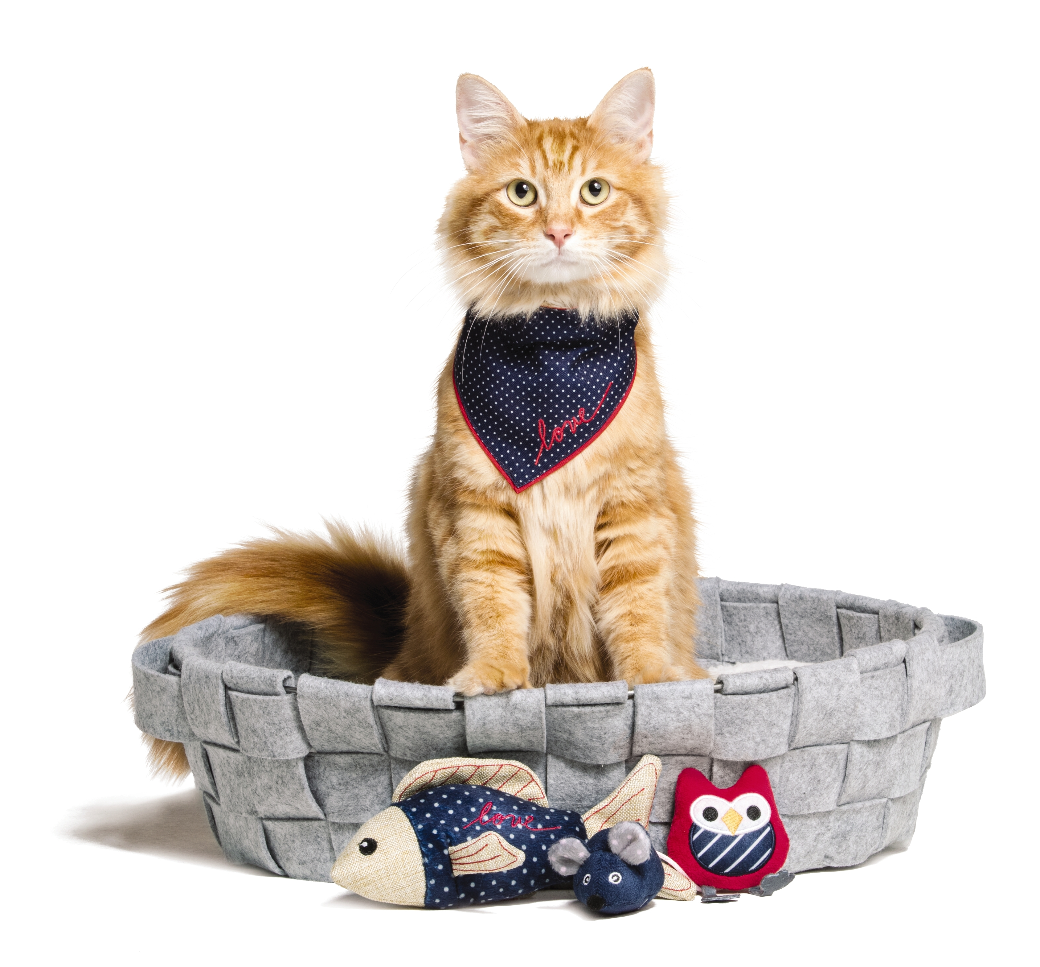 Crazy for Cats PetSmart Ellen Expand New ED Ellen DeGeneres