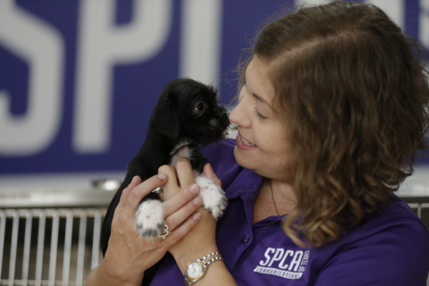 Maura Davies comforts local pets in need in Dallas at the SPCA of Texas, an organization working to support pets in need in the areas affected by Hurricane Harvey. To support Hurricane Harvey rescue, relief and recovery efforts, PetSmart Charities has pledged to donate $2 million to support local nonprofits and animal welfare organizations, like the SPCA of Texas. The largest funder of animal welfare in North America has also delivered more than 110,000 pounds, or 55 tons, of pet food donated through PetSmart's philanthropic Buy A Bag, Give A Meal* program and coordinated at least 10 truckloads of pet supplies, including crates, collars, leashes and pet beds and kitty litter to the affected areas. (Photo: Business Wire)