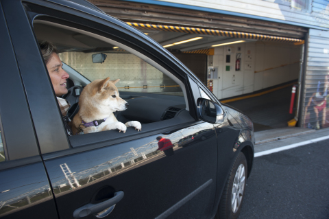 More than 1 Le Shuttle client out of 10 is travelling with his pet - Copyright Eurotunnel