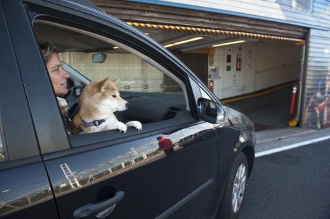 Plus d'1 client Le Shuttle sur 10 voyage avec son animal de compagnie - Copyright Eurotunnel