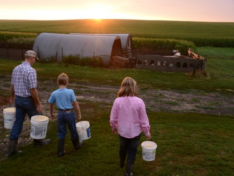 Niman Ranch began hog production in 1995 with one farmer, Paul Willis, from Thornton, IA. Since that time the company has expanded to 629 hog farmers in 12 states. During that same period, national hog farming declined significantly. From 1970 to 2016 the U.S. lost 92% of its hog farms. (Photo: Business Wire)