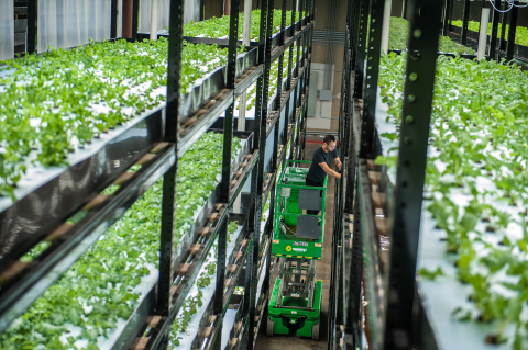 Sustainable Indoor Vertical Farming in Action: Urban Organics Dramatically Increases Output with New Location (Photo: Business Wire).