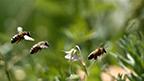 BeesVita Plus TV Spot 7-Languages