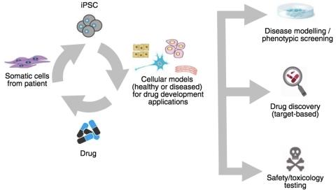 Ncardia firma un accordo di licenza con il primo partner farmaceutico per il portafoglio di brevetti dedicati al disease modeling