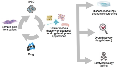 """Ncardia is a leader in standardized, validated iPSC assays for safety, phenotypic screening and disease modeling. For scientists conducting cardiovascular and neural safety and efficacy projects, Ncardia is providing tools to facilitate accelerated development of drugs, while replacing animal studies and putting a """"human"""" aspect back into drug discovery. (Graphic: Business Wire)"""