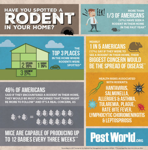 Have you spotted a rodent in your home in the past year? Find out how many Americans have! (Graphic: Business Wire)