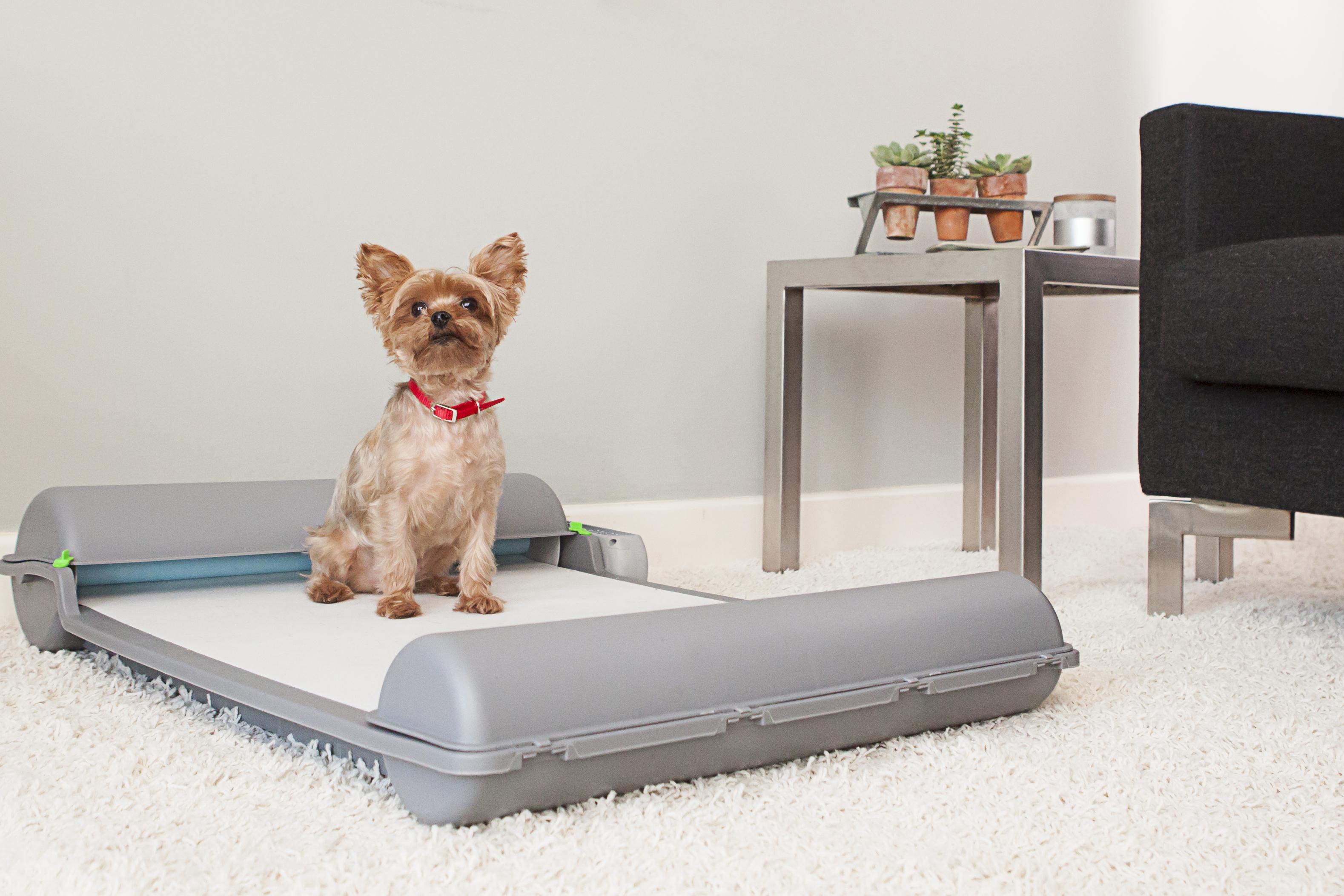BrilliantPad Self Cleaning Dog Potty Lands $500 000 Deal on