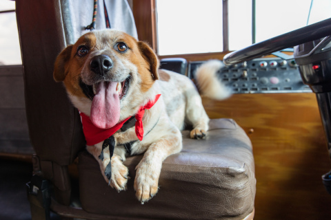Choppa ready to make the journey in the BOBS from SKECHERS Roving Rescue bus from Houston to his forever home on the East Coast. (Photo: Business Wire)