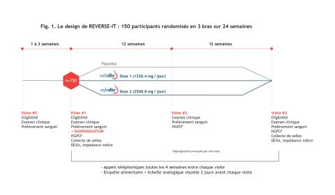 Le design de REVERSE-IT : 150 participants randomisés en 3 bras sur 24 semaines