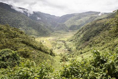 A view of the Finca San Isidro Reserve in Guatemala's Cuchumatanes Mountain range. (Photo by Robin Moore)