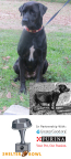 Betty was emaciated on the side of the road (inset photo). Funds raised through the 2017 Shelter Bowl allowed GreaterGood.org's Rescue Bank to send the food necessary to nurse her back to health. (Photo: Dogs, Etc. Rescue)