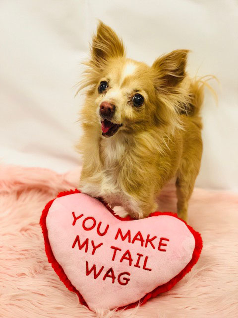 Petsmart Launches Valentines Day Collection With Exciting Ways For