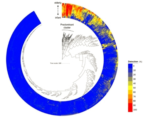 (Fig.1) Distribution of gut microbiota in healthy Japanese subjects (Graphic: Business Wire)
