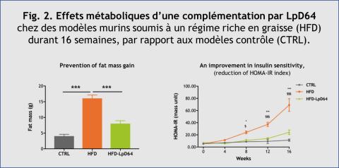 Fig. 2. Effets métaboliques d'une complémentation par LpD64 chez des modèles murins soumis à un régime riche en graisse (High Fat Diet, HFD) durant 16 semaines, par rapport aux modèles contrôle (CTRL). (Graphique: VALBIOTIS)