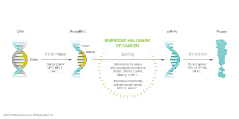 Splicing factor mutations are an emerging hallmark of cancer. (Photo: Business Wire)