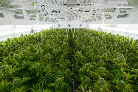 Basée à Toronto et dirigée par une équipe possédant une vaste expérience en matière de cannabis ainsi qu'en matière de marques internationales de produits grand public, l'entreprise High Park Company fut mise sur pieds dans le but de développer, de vendre et de distribuer un très vaste portefeuille de produits de cannabis. (Photo: Business Wire)
