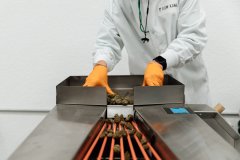 A processor at Flow Kana's Flow Cannabis Institute operates the inflorescence sorter preparing cannabis for packaging. (Photo: Business Wire)