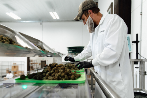 A processor at Flow Kana's Flow Cannabis Institute operates the pneumatic micro-batcher, packaging sungrown organically cultivated cannabis from small craft farms in Mendocino and Humboldt counties. (Photo: Business Wire)