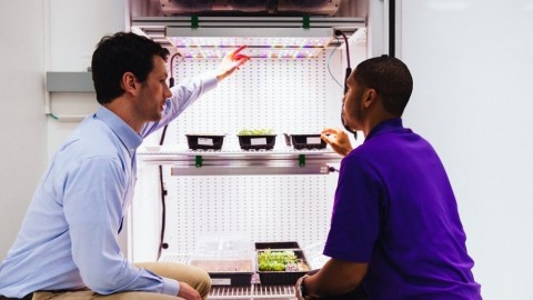 From left, Steve Graves, Strategic Program Manager of Urban & Digital Farming, Osram Innovation, Americas Region, and a researcher discuss the benefit of light recipes on micro greens in a growth chamber, which are being studied as part of ground research at Kennedy Space Center. (Photo: OSRAM)