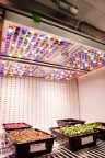 Osram's Phytofy RL connected horticulture research lighting system is comprised of smart lighting software coupled with a unique setup of connected grow light fixtures. (Photo: OSRAM)