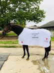 Sentient Jet to Sponsor Gronkowski at the 2018 Belmont Stakes Showcasing Support of Boston and Horse Racing Communities. (Photo: Business Wire)