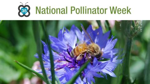 Syngenta takes road trip up I-35 Monarch Highway to celebrate National Pollinator Week. (Photo: Syngenta)