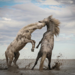 The Nature Conservancy Announces 2018 Global Photo Contest Winners