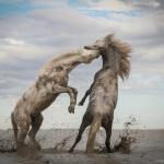 The Nature Conservancy anuncia los ganadores del Concurso Global de Fotografía 2018.