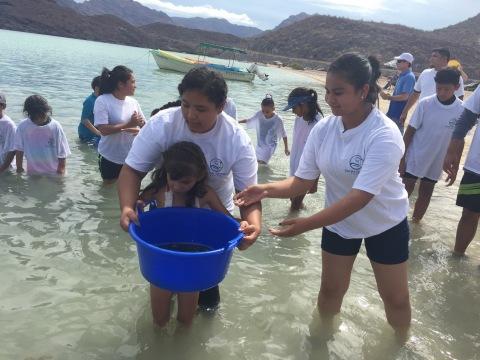 Jóvenes ayudan a liberar totoaba en el Mar de Cortés en un intento por repoblar esta especie que se encuentra en peligro de extinción debido a su comercio ilícito. (Foto: Business Wire)