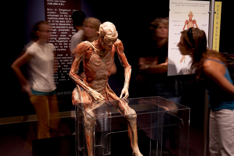 Attendees view one of the 15 whole body specimens featured in the OUR BODY: The Universe Within exhibition. The exhibit gives attendees an inside look at the human body and literally and figuratively goes under the skin. (Photo: The Universe Within Touring Company)