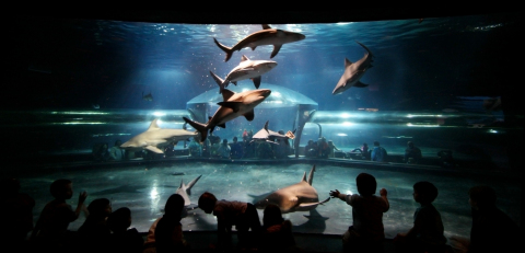 The Oklahoma Aquarium is home to the world's largest collection of bull sharks. Bull sharks are considered to be one of the most dangerous species of sharks because of their aggressive behavior. Contest winner will have opportunity to dive with the sharks wearing a 45-pound chain metal suit. (Photo: Business Wire)