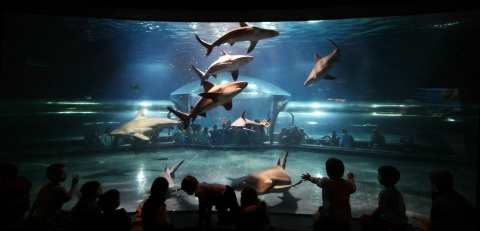 The Oklahoma Aquarium in Jenks, Okla., is celebrating Shark Week with the first-ever, public diver t ...
