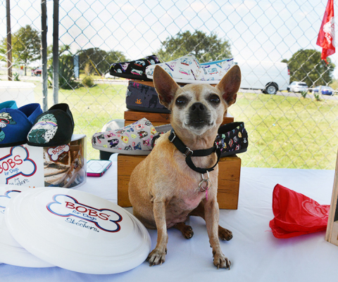 Skechers' BOBS for Dogs and Best Friends Animal Society partnership has helped more than 583,000 she ...