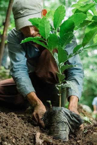 Starbucks will expand its existing 100 Million Tree donation program and partner with The Colombian Coffee Growers Federation to supply 20 million coffee trees, technical support and supplies over the next two years to smallholder farmers in Colombia (Photo: Business Wire)