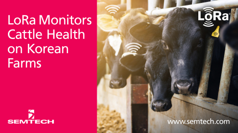 Semtech and SK Telecom Leverage LoRa Technology to Monitor Cattle Health (Graphic: Business Wire)